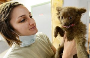 Puppy with Veterinarian