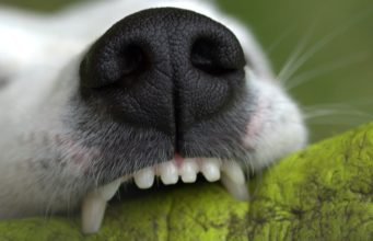 Closeup of Dog chewing
