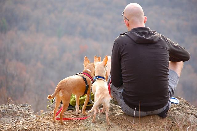 man, dogs, hiking