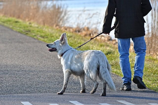 Dog going for a walk on a leash