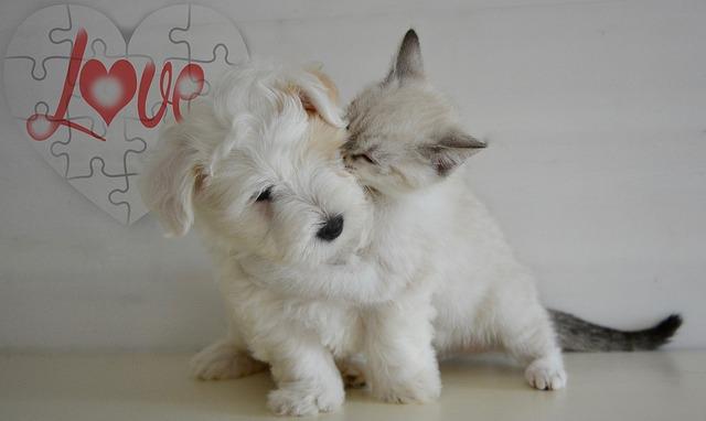 doggy, kitten, puppy