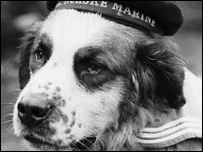 Bamse the Sailor Dog