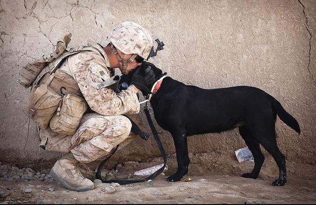 soldier, dog, companion