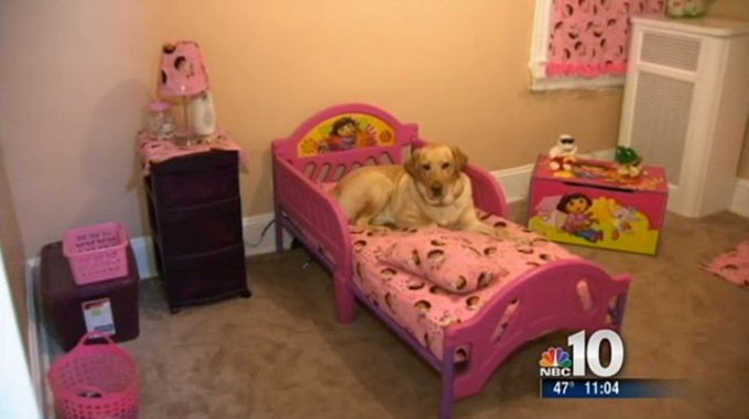 Guide Dog Saves Blind Woman From Burglars gas leak