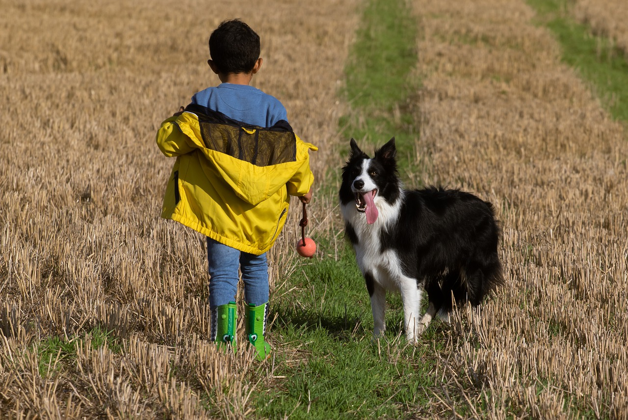 boy and dog in field, boy and dog, boy in yellow